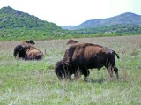 Wichita Mountains Refuge