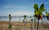 Saltwater Mangroves