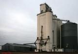 Amarillo - Attebury Grain.