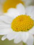 Yellowflower_U_Macro4.jpg
