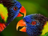 Birds etc