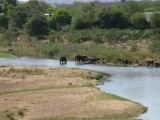 Elephants - at Malelane - just at the edge of the park.