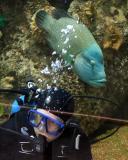 Diver & Potato Cod