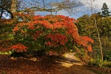 'Burning bush', Stourhead