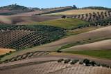 Folds and fields near Olvera