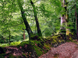 Deep in the woods, Exmoor
