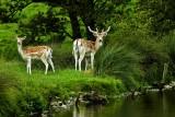 Deer, deer! (9800)