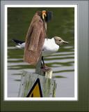 Tern coat!