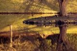 Big tree, little island ~ Stourhead