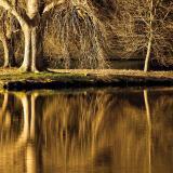 Trees of golden brown