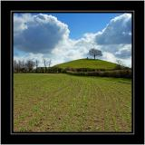 New shoots, Burrow Hill