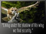 'Living under the shadow…' slide from the Birds of prey series