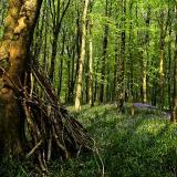 Bells'n'branches, Hooke Park