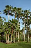 Tall trees and short, Don Carlos