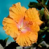 Orange ~ pool-side, Miraflores