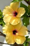 Double yellow, Miraflores