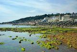 Rocks and weed, Lyme Regis