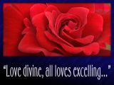 'Love divine' slide from the Lanhydrock roses series