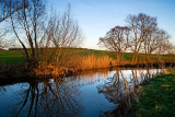 Reeds and trees, River Yeo