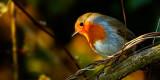 'Robin Redbreast', Wells
