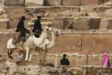 Camel Police at Pyramids