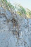 _NW81987 Grass Roots/ Rhizomes