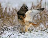 Winter HunterFirst Snow.jpg