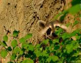 _JFF7195 Baby Peeking.jpg