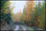Dans la forêt de Wisches