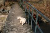 Théo a un peu le vertige sur les ponts