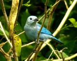 Blue-grey Tananger 2