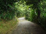 Entrance road to Asa Wright