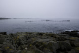 Foggy fish weir