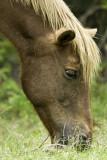 Wild pony (horse)