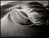 On the beach (Challenge: Sand)