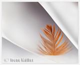 Featherlight (Challenge: Light on White)