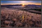 Daybreak Sunburst