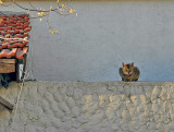 Cat on a Cool Stone Wall