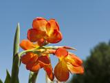 Newseum flowers