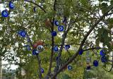 The Evil Eye Tree