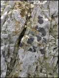 Lichens on sandstone.jpg