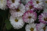 From Her Garden