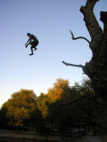 Central old-town Bukhara - boys leap off mulberry tree into Lyaby House pool