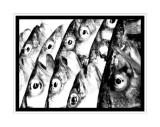 Fish eye.
