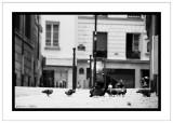 Pigeons of Paris.