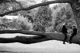 Tree Talks.