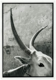 horns.jpg