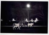 Sat.night.stroll.jpg