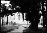 aaraintree.jpg