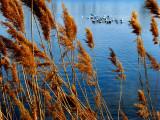BirdBath St Laurence River